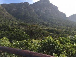 Kirstenbosch (Custom)