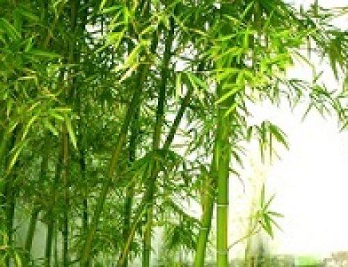 Alexandria besoek Kowie Bamboo Farm virtueel