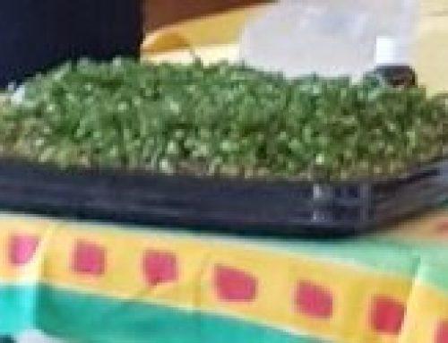 Gansbaai gesels oor Microgreens