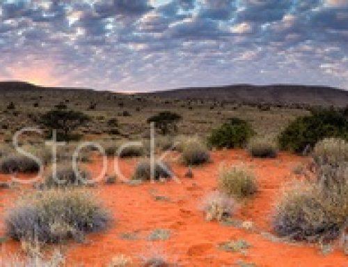 Sirkel Kalahari pryk in plaaslike koerante